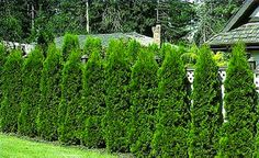 Whether you're looking to create a privacy enclosure, windbreak, or wildlife deterrent, or simply bring some traditional appeal to your outdoor space, hedgerows are a versatile, beautiful addition to any garden. Click through for our tips on using these versatile plants.