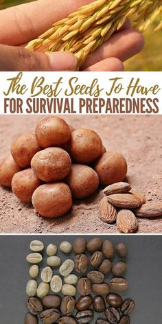 The Best Seeds To Have For Survival Preparedness - When it comes to survival and growing food most of us are constricted by growing area, some worse than others. Particularly those in urban areas.