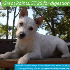 Acupressure Points for Dogs Digestion