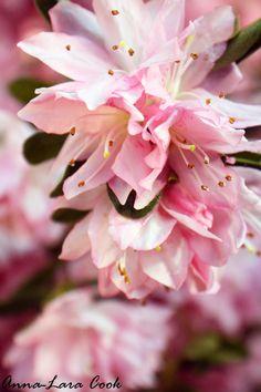 blossoms in Georgia