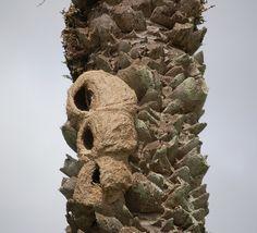 Galeria de A natureza fazendo arquitetura: as construções do João-de-barro - 4