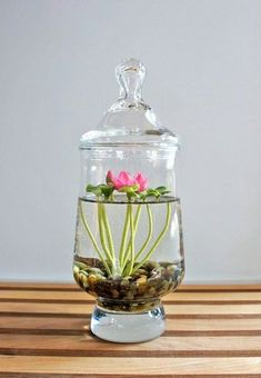 Try this DIY Freshwater Terrarium today. This project is simple yet beautiful. Requires little time and you will love the finished result.