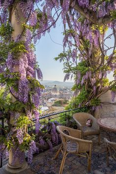 Wisteria covered patio in Granada, Andalusia, Spain
