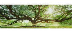 Sklenená Fotka Big Tree - viacfarebné, Romantický / Vidiecky, sklo (33/98/2cm)