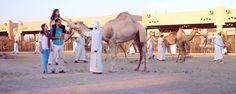 Пазар за камили