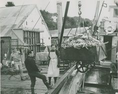 Unloading king crab off a fishing boat in Seldovia, Alaska, 1965.