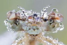 The Unexpected Art of Dew Drops | MNN - Mother Nature Network