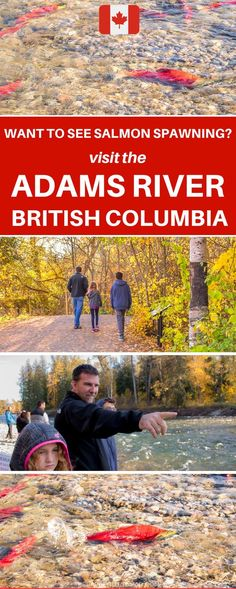 How to See the Adams River Salmon Run in British Columbia in 2019 Where to see salmon spawning in British Columbia at the. Travel With Kids, Family Travel, Group Travel, Backpacking Canada, Salmon Run, Canada Destinations, Canada Holiday, Canadian Travel, Amigurumi