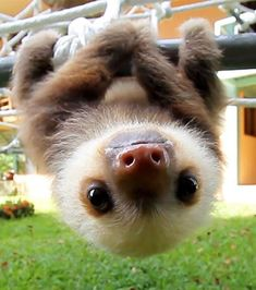 Super cute baby animals - Funny Wild Animal This video is a compilation of wildlife of animal babies. They're very cute animals just you have seen. Baby Animals Super Cute, Cute Little Animals, Cute Funny Animals, Cutest Animals, Funny Cats, Cute Baby Sloths, Cute Sloth, Baby Otters, Baby Piglets