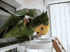 Self sufficiency parrot… Well when you got an itch you got to do something!