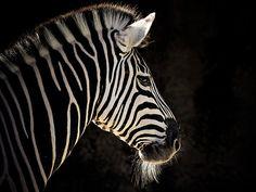 Stripes by Natalie Manuel