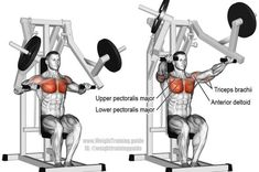 A compound push exercise for upper-body strength and building your chest. Muscles worked: Lower Pectoralis Major, Upper Pectoralis Major, Anterior Deltoid, and Triceps Brachii. See website to learn when this exercise is appropriate.