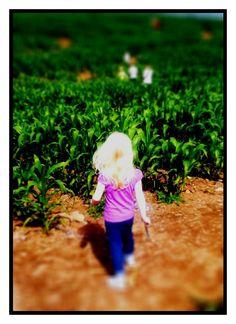 Erin in the cornfields by Shaun Ward Photography Railroad Tracks, Photography, Photograph, Fotografie, Photoshoot, Fotografia, Train Tracks