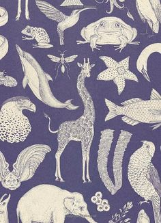 Animalium: welcome to the museum: jenny broom, katie scott: Textures Patterns, Print Patterns, Motifs Animal, Illustrator, Stuffed Animal Patterns, Surface Pattern Design, Natural History, Pattern Wallpaper, Art Inspo