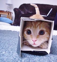 Box cat! And my cat lies on my face right know... PINO WHY DO U HAVE TO WAKE ME UP SO EARLY