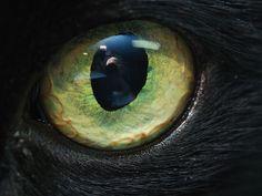 Cat Eyes - Ormids Lair