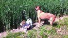 Dog at a wheat farm