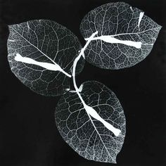 Breath: Floral Photograms - Photographs and text by Roxanne Worthington Photography Themes, Paris Photography, Photography Projects, Artistic Photography, Fine Art Photography, Amazing Photography, Nature Photography, Patterns In Nature, Textures Patterns