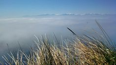 Peaks of the Olympics rise above clouds from the Bluff Trail at Fort Ebey State Park