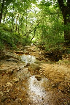 Baeksasil Valley - A beautiful and natural forest with many different trails. You can follow the streams while listening to the birds and let your kids running around.  Take the bus No. 0212, 1020, and 7022 at Exit 3 of Subway Line 3, Gyeongbokgung Station and get off at Buamdong Community Center or Jahamun-gogae bus stop.