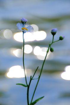 「ふるまい」はすなわち自己の行為の善悪であります。 よいことをして仕合わせをあたえてもらうということは、ありがたいようですが、一つの束縛ですね。 人間は禍福に左右されない、念仏者は禍(わざわ)いや幸いに支配されないものである。 -金子大栄(『歎異抄 仏教の人生観』より)-