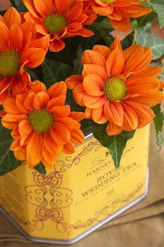 Autumn Splendor....Shopgirl
