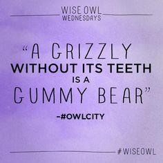Wise Owl Wednesdays