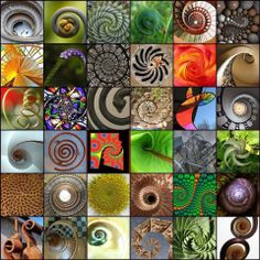 Nature's Art: Universal Spirals and Fibonacci