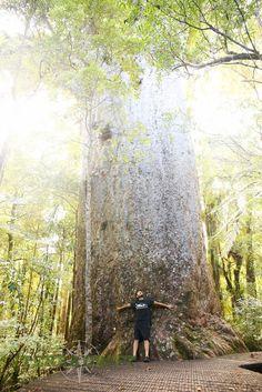 Take a Road Trip around New Zealand's North Island | Kauri Forest | TerraDrift