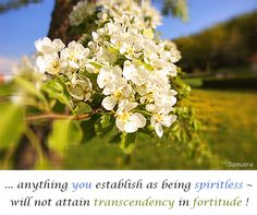 ... anything you establish as being #spiritless ~ will not attain #transcendency in #fortitude !