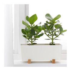 Succulent in nook  BITTERGURKA Plant pot IKEA Ikea Plants, Potted Plants, Indoor Plants, Indoor Garden, White Planters, Planter Pots, Fruit Garden, Garden Pots, Diy Plant Stand
