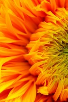 Colors | Orange by Paintingdreams