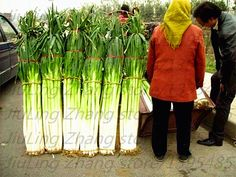 100 pcs/bag onion seeds,green onion,Organic Heirloom vegetable fruit seeds, sweet and healthy,for home garden planting