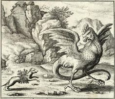 The basilisk and the weasel, in a print attributed to Wenceslas Hollar.