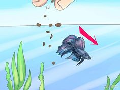 How to Tell if a Betta Fish Is Sick: 10 Steps  For your next fishy baby @meganbaileyx3