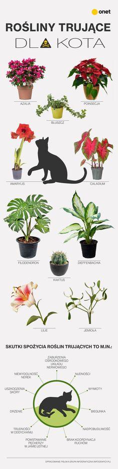 Planting Flowers, Wtf Funny, Life Hacks, Feng Shui, Pets, Garden, Animals, Wd 40, Diy