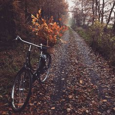 A combination of my two favorite things...Fall and bike rides! I can't wait for October to head out for some chilly rides!