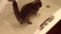 A Cat Having A Bath With Its Friend The Fish