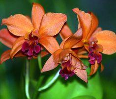 Orchid World - Barbados