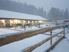 Wintermärchen beim American Horse Point! www.americanhorsepoint.com Mustang, Horses, American, Outdoor Decor, Home Decor, Homemade Home Decor, Mustangs, Interior Design, Horse