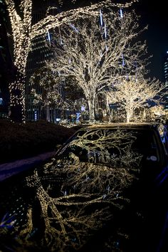 White lights of winter in Seoul by Seoul Korea, via Flickr