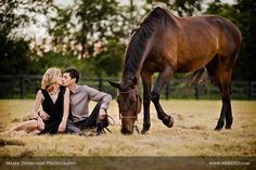 Horse engagement picture