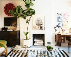The fiddle-leaf fig ficus, or ficus lyrata, is hands down my favorite indoor house plant. These living art sculptures are characterized by large, stiff, and almost leather like dark green leaves radiating off wooden stems. It's also super hardy – ideal for all of you with black thumbs out there!