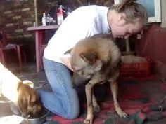 Mr. Ein at Street Puppy Care - http://petcarecheap.com/mr-ein-at-street-puppy-care/