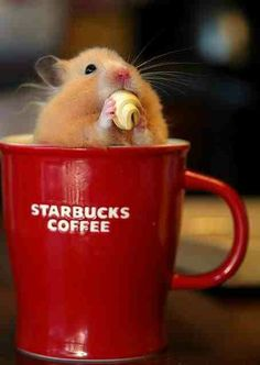 Hamster & coffee