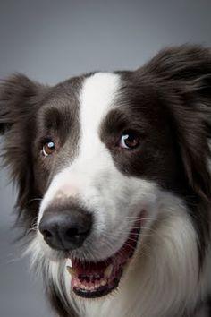 Landon-Dogs-14.jpg