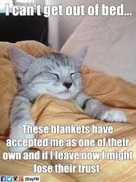 can t get out of bed these blankets have accepted me cat - Google Search