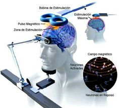 Istanbul New Airport, Neuroscience, Education, Brain, Blog, Transcranial Magnetic Stimulation, Neurons, Fibromyalgia, Behavior