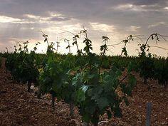 #vino #wine