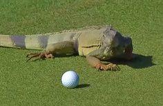 Animal Encounters on the PGA Tour